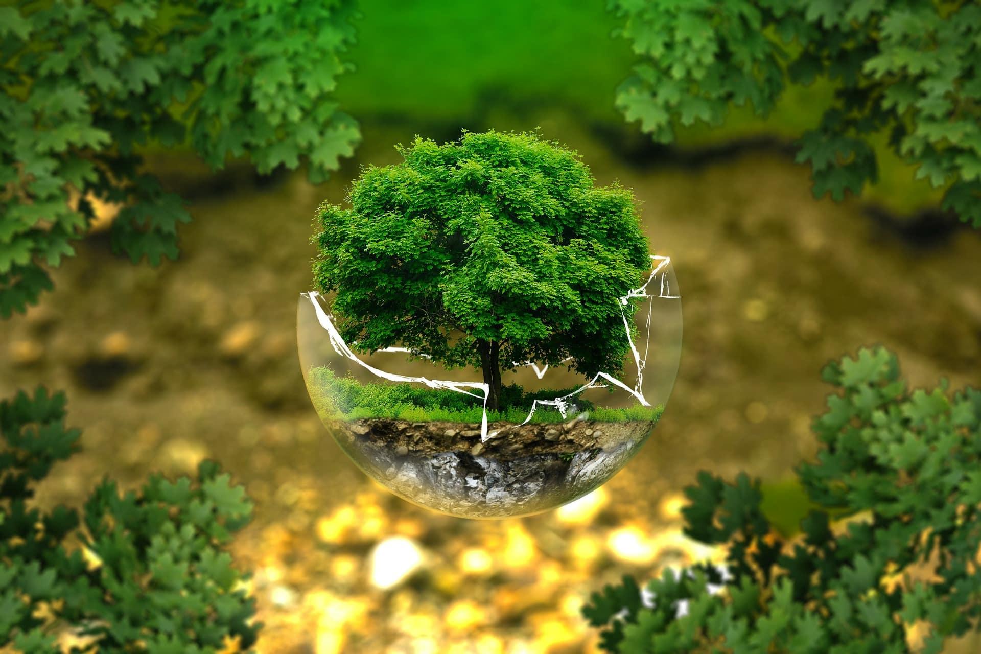5. Irreversible Umweltschäden